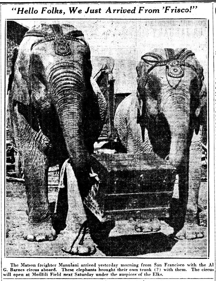 Circus elephants 1928